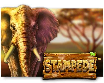 Play Stampede